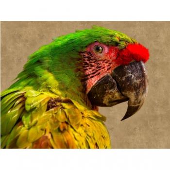 Diamond Dot Painting Green Yellow Parrot 30x40cm