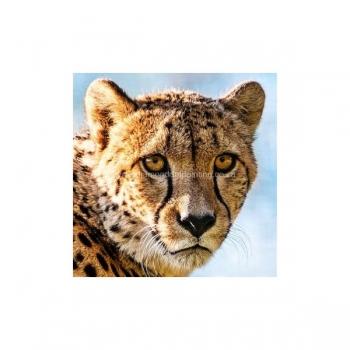 Diamond Dot Painting Cheetah Face 30x30